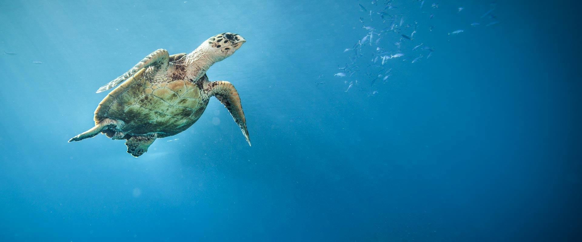 Red Sea nurkowanie Buddy