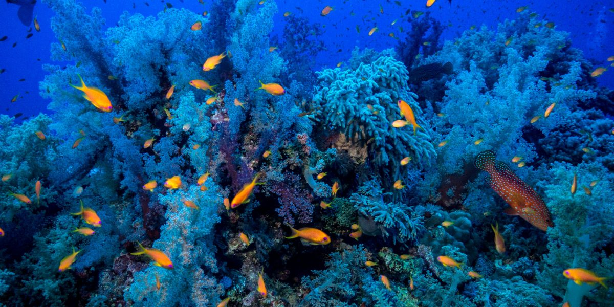 rafa Elphinstone nurkowanie